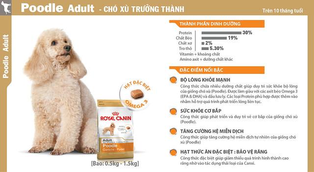 cho-xu-poodle