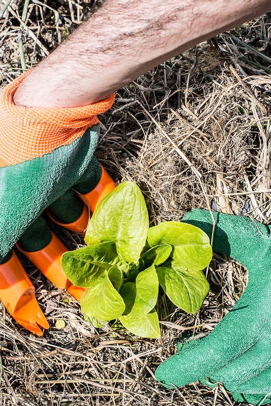 Orto - preparativi piante, travaso