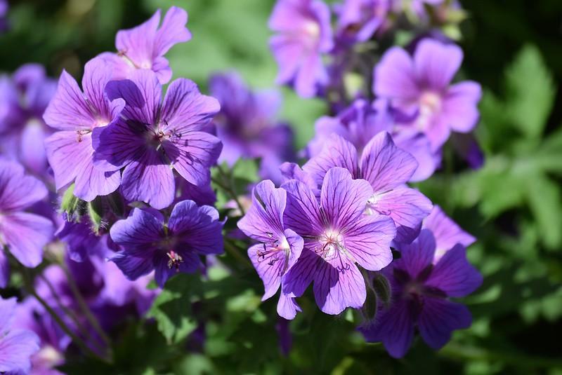 Flowers 27.05 (4)