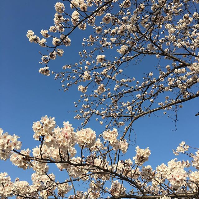 空になる心は春の霞にて世にあらじとも思ひ立つかな 西行