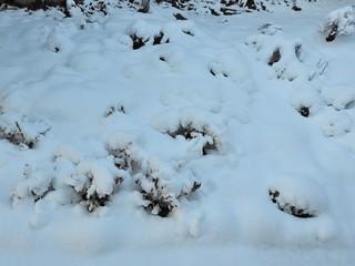 雪の朝1 マーガレット