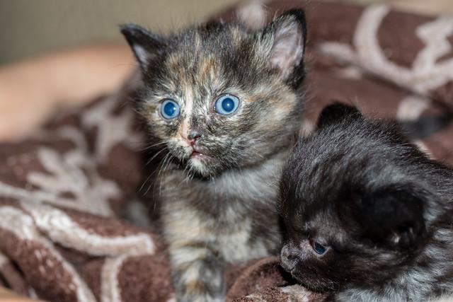 Ella's kittens 4 weeks old
