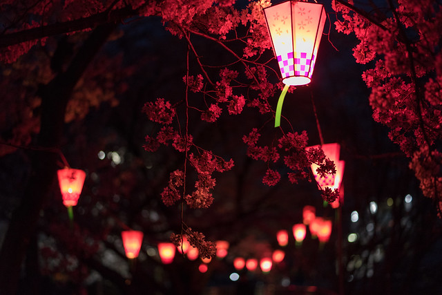 CherryBlossoms_31