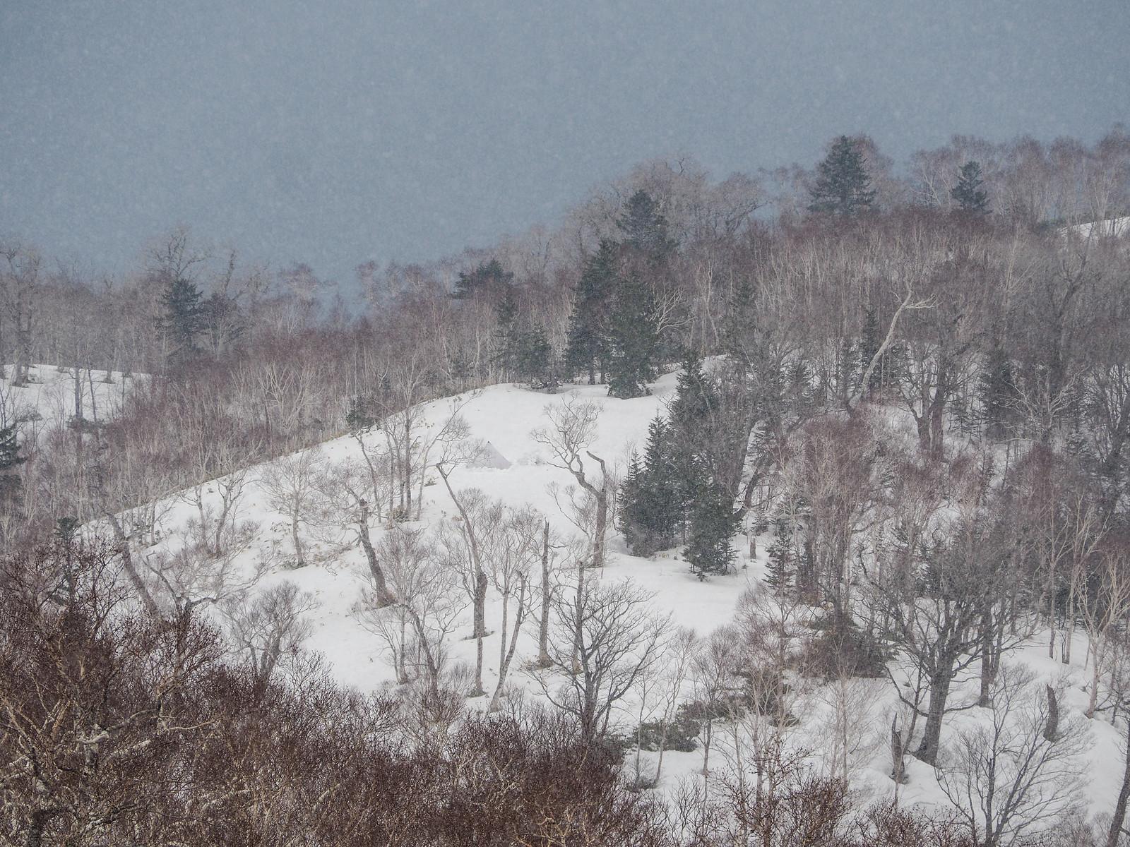 Campsite at 620m on the Mt. Ichankoppe ridge (Hokkaido, Japan)