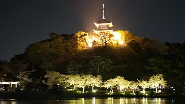 DSC07885三渓園観桜の夕べ