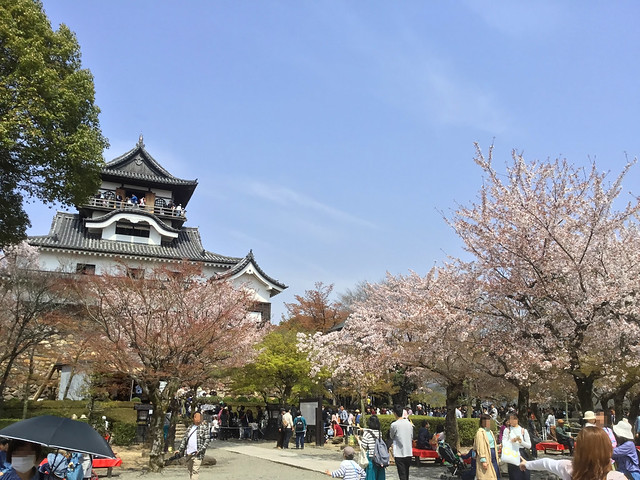 犬山城と桜 IMG_2703_2