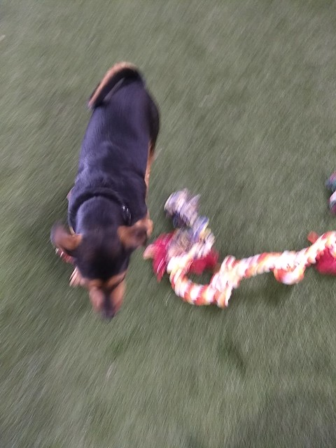 05/24/18 Rope Toy Play :D