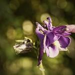 20180530-181443 - Garden Flower Bokeh