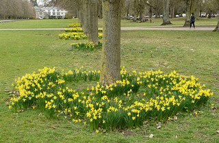 20180322-25_Coombe Abbey Country Park - Daffodils + Avenue of Trees