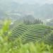 Le jardin du Wei Shan Huang Cha