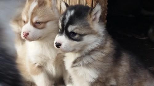Peter's puppies