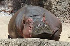 San Antonio Zoo April 16, 2018
