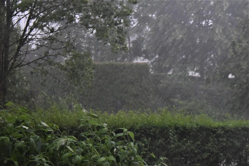 Rain 31.05 (3)