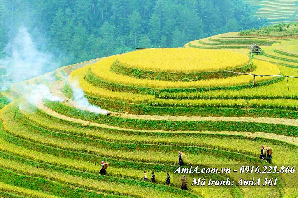 AmiA 361 - Tranh đẹp phong cảnh quê hương ruộng bậc thang