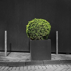 #scenery #bush #wall #posts #outdoors #decoration #nopeople #outdoors #city #urban