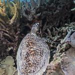 Yap, Micronesia D850