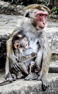 A mother feeding her child on steps in Sri Lanka