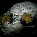 Skull and Dandelions by Wayne Howell