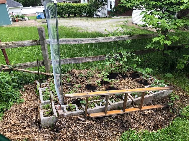 Cinder Block Garden - building a trellis for watermelons
