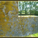 Lichen on cross in graveyard