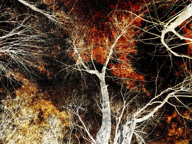 Weird Trees 15