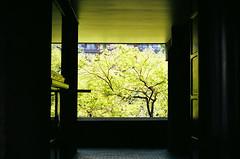 Tree, Barbican