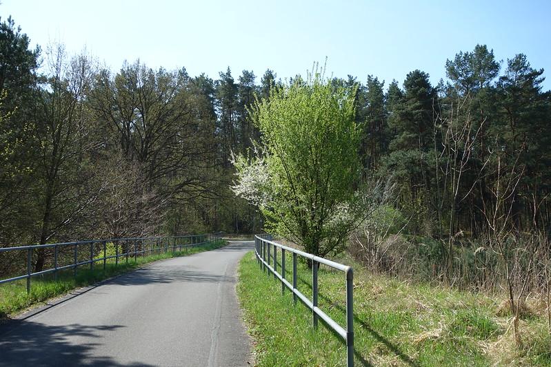 kleine Waldstrasse hinter Fürstenberg. blühende Sträucher und sonniges Wetter, so soll es sein!
