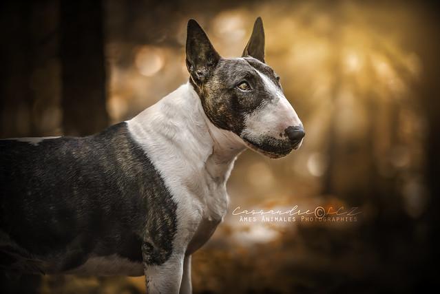 Âmes Animales Photographies 42236548112_da2b7c24ae_z