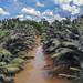 Borneo 2018 by Christopher.Michel