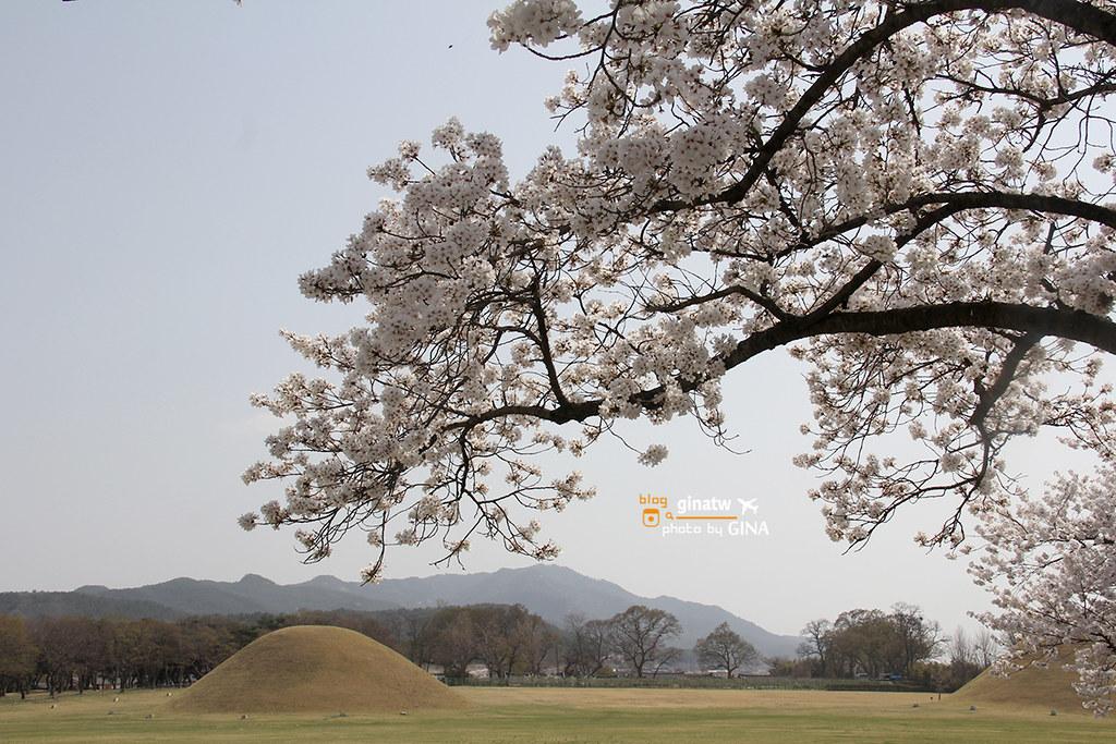 【慶州賞櫻】韓國櫻花必去!整個城市都是-櫻花大道美到不行!推薦追櫻必來!! @GINA環球旅行生活|不會韓文也可以去韓國 🇹🇼