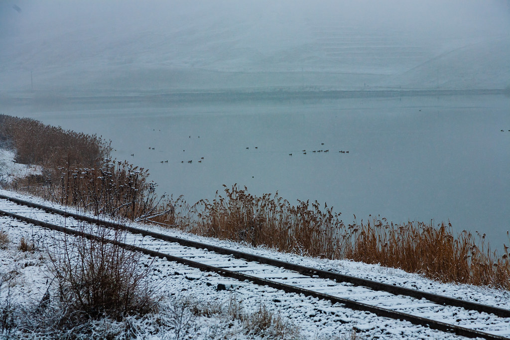Train tracks by lakeshore