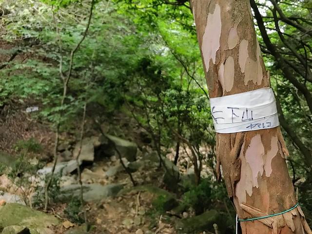仙ヶ岳 白谷道 ヤマレコ?