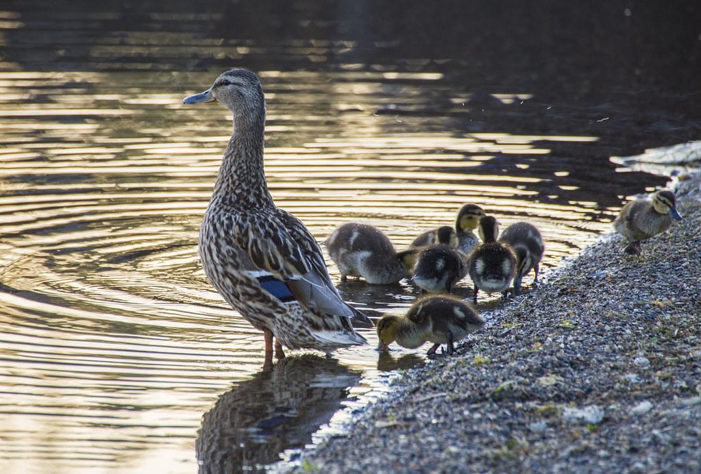 Семеро смелых и их Мама