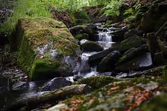 The Porter Brook, Sheffield
