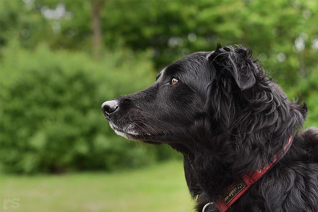 . watchdog