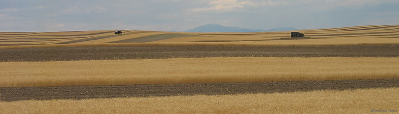 Wheat fields below Laramie Peak