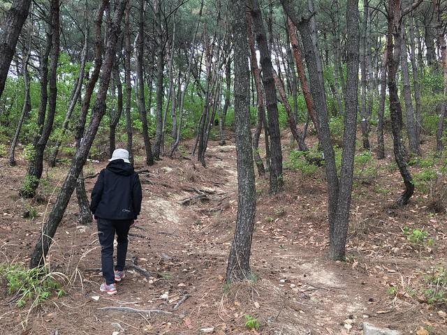 16큰 바위길과 소나무 숲을 지나 정상으로 향하는 길