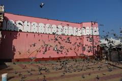 Indien 2015 - 4.Tag, Bikaner - Jaisalmer