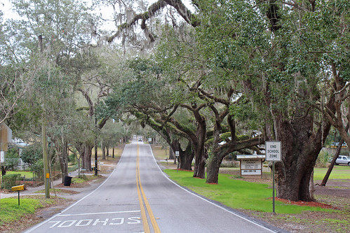 street road landscaping trees floralcity florida