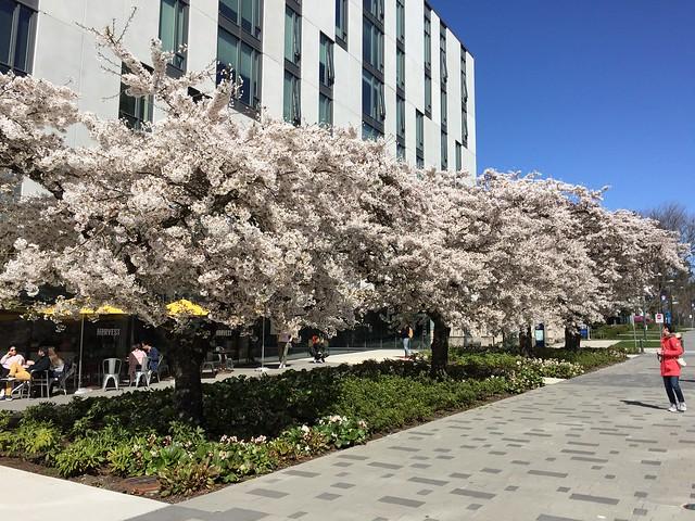 UBC spring