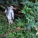 The Heron & The Kingfisher