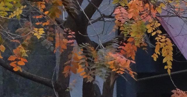 Una de hojas