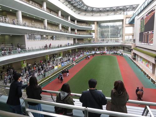 福島競馬場のパドック