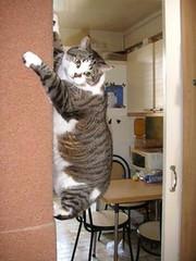 #cats #pets #animals #cute #funny #kitchen #room #ro #refrigerator #microwave #ro #table #chairs #home #house #wall #art #catart #animalart #petart #kittyart #kitty #kitties