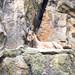 <p><a href=&quot;http://www.flickr.com/people/28703702@N08/&quot;>djsmith46</a> posted a photo:</p>&#xA;&#xA;<p><a href=&quot;http://www.flickr.com/photos/28703702@N08/42206969904/&quot; title=&quot;Berlin Zoo-2&quot;><img src=&quot;http://farm1.staticflickr.com/879/42206969904_95a550ba40_m.jpg&quot; width=&quot;240&quot; height=&quot;180&quot; alt=&quot;Berlin Zoo-2&quot; /></a></p>&#xA;&#xA;<p>OLYMPUS DIGITAL CAMERA</p>