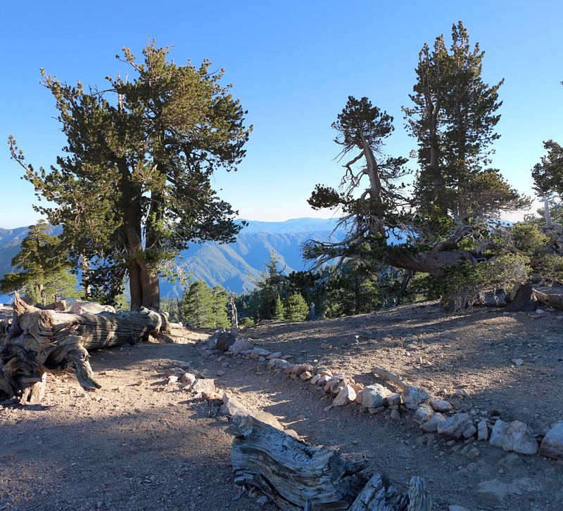 Heading down the San Bernardino Peak Trail from Limber Pine Bench