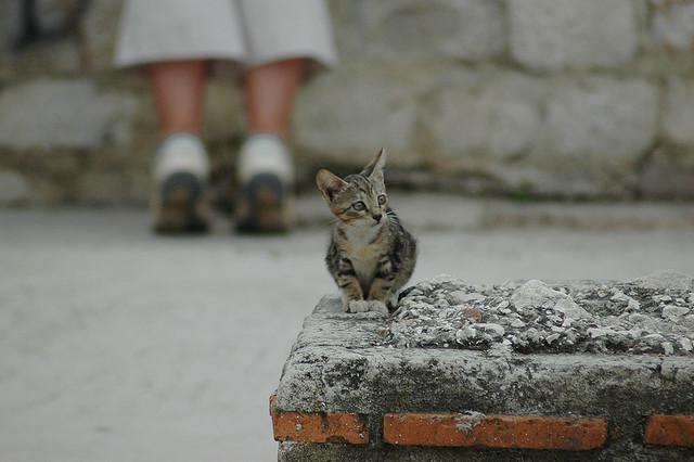 Kitten in Split, Croatia
