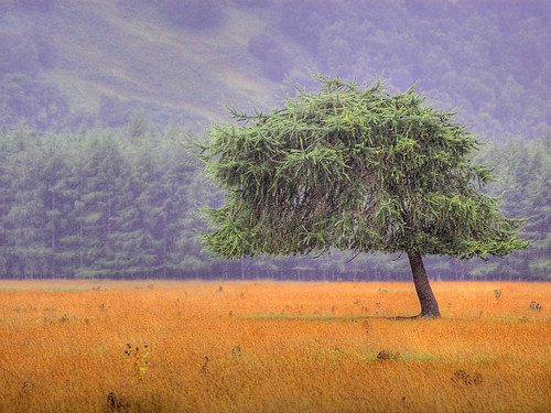Cool Scottish Tree