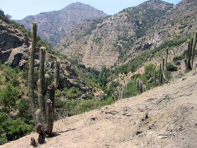 Cactus santuario de la naturaleza santiago by for Cactus santiago