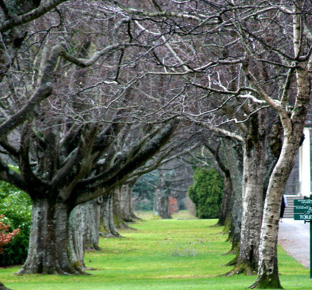 Trees at Queens Park in Invercargill